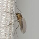 蚊を退治するスペシャル裏技とは!?