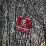 全世界には5000万個の地雷が存在!最新撤去方法にネズミが大活躍!?