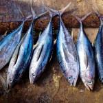 夏バテ対策には「紅茶」「鮭」、そして宮崎の郷土料理「冷や汁」で決まり!