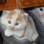 猫をあしらったプレゼントにオススメの商品「5選」