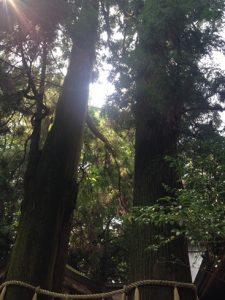 taka-shrine04