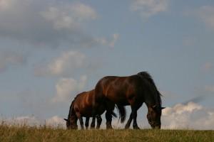 horses1201